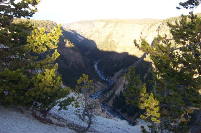 A canyon with a running riveer in Yellowstone National Park.