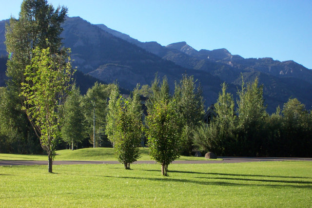 Trees, grass, mountains, blue sky in Jackson Hole, WY